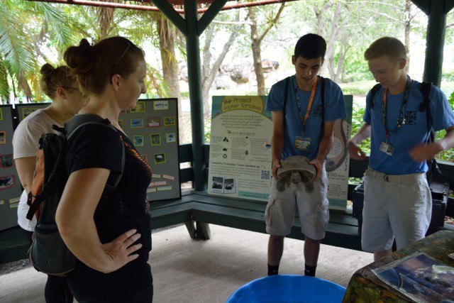 Conservation Teen Scientists holding one of the zoo's education outreach gopher tortoises and explaining to zoo guests about their importance in the wild.