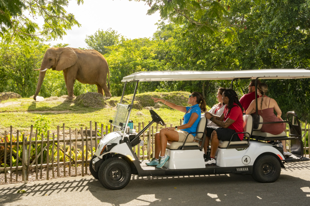 People in a golf cart in front of elephant exhibit