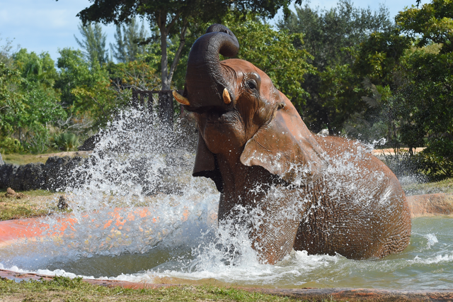 elephant taking a bath at Zoo Miami