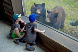 Two little boys viewing two black bears through glass window