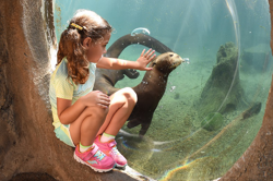 Little girl viewing otter and touching viewing glass