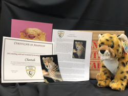 Cheetah plush with certificate and photo