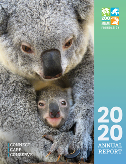 Annual Report 2020 Cover - Koala mom and baby