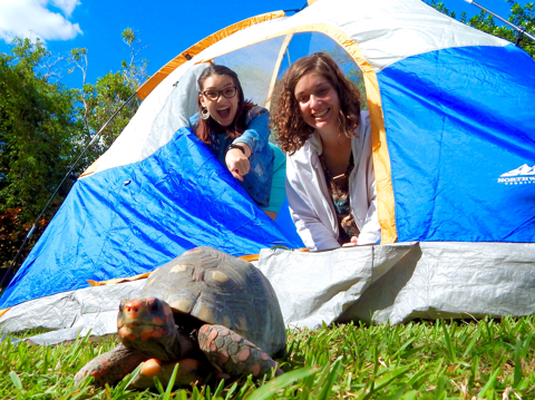 girls in tent pointing at tortoise at Zoo Miami campout