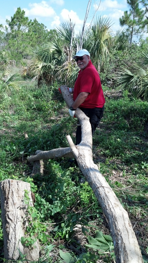 HandsOn Miami volunteer helping remove a piece of Indian rosewood