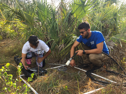 FIU interns Brianna an Adrian doing habitat assessments for gopher tortoises in the pine rocklands