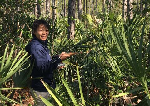 FIU intern Brianna tracking a gopher tortoise using radiotelemetry