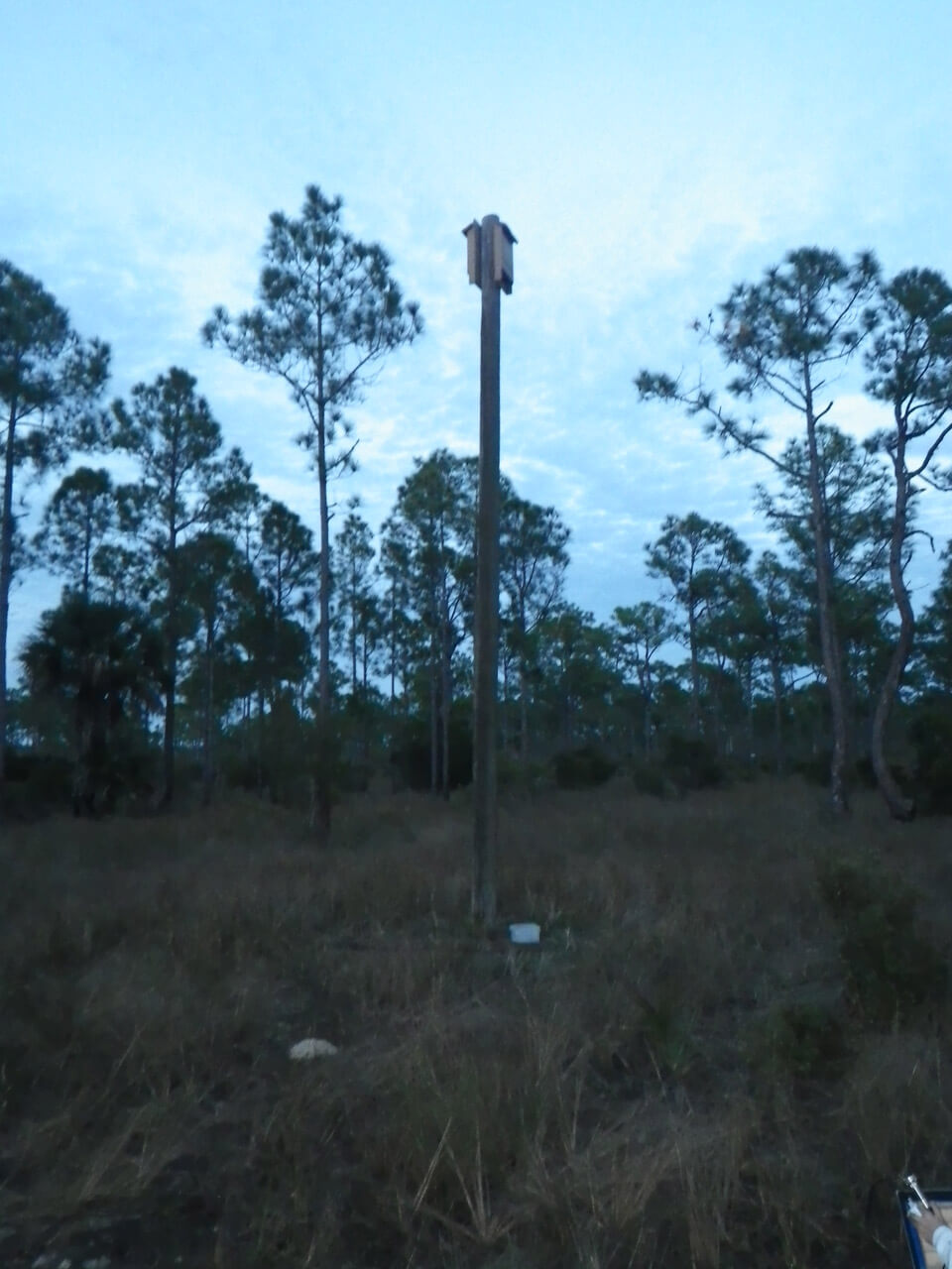 Two large chamber bonneted bat boxes back to back on a utility pole in Babacock Webb Wildlife Management Area