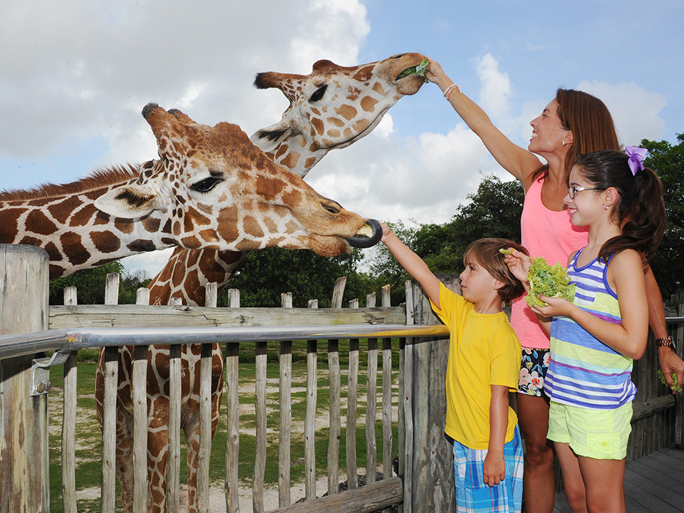 woman and children feeding giraffes at Zoo Miami