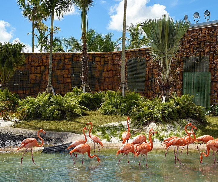 group of flamingos in pool