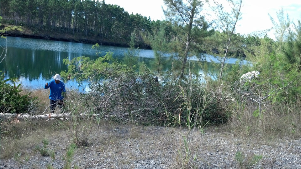 FWC contractor removing Melaluca from shoreline of Zoo Miami lake