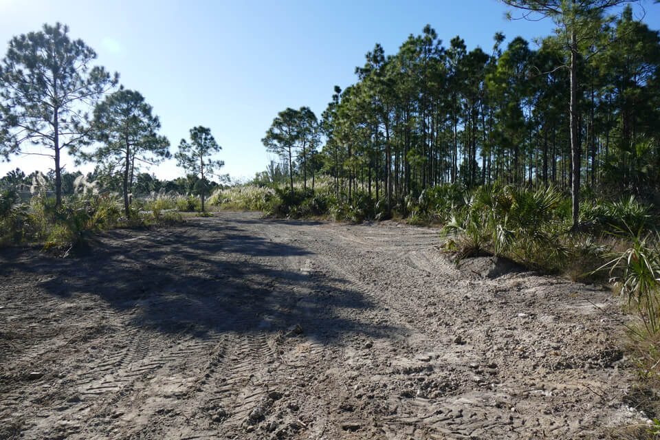 Second restoration site cleared of fill and invasives