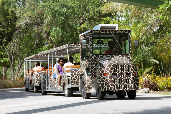 safari tram tours at Zoo Miami