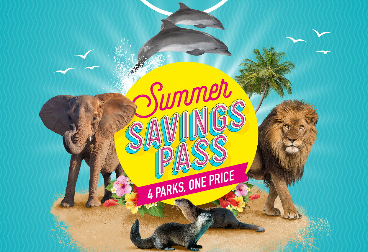 Featured Event Image for Summer Savings Pass - SUSPENDED