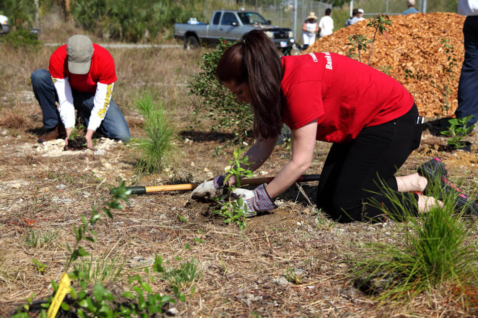 volunteers planting at pine rockland restoration site