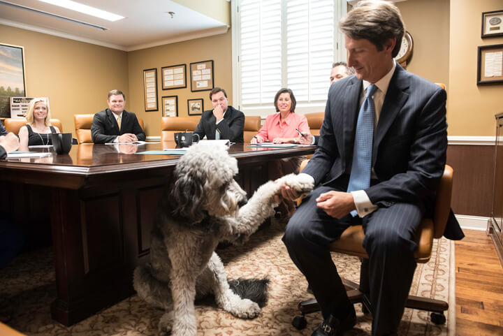 image of the bank president and his dog in a board meeting