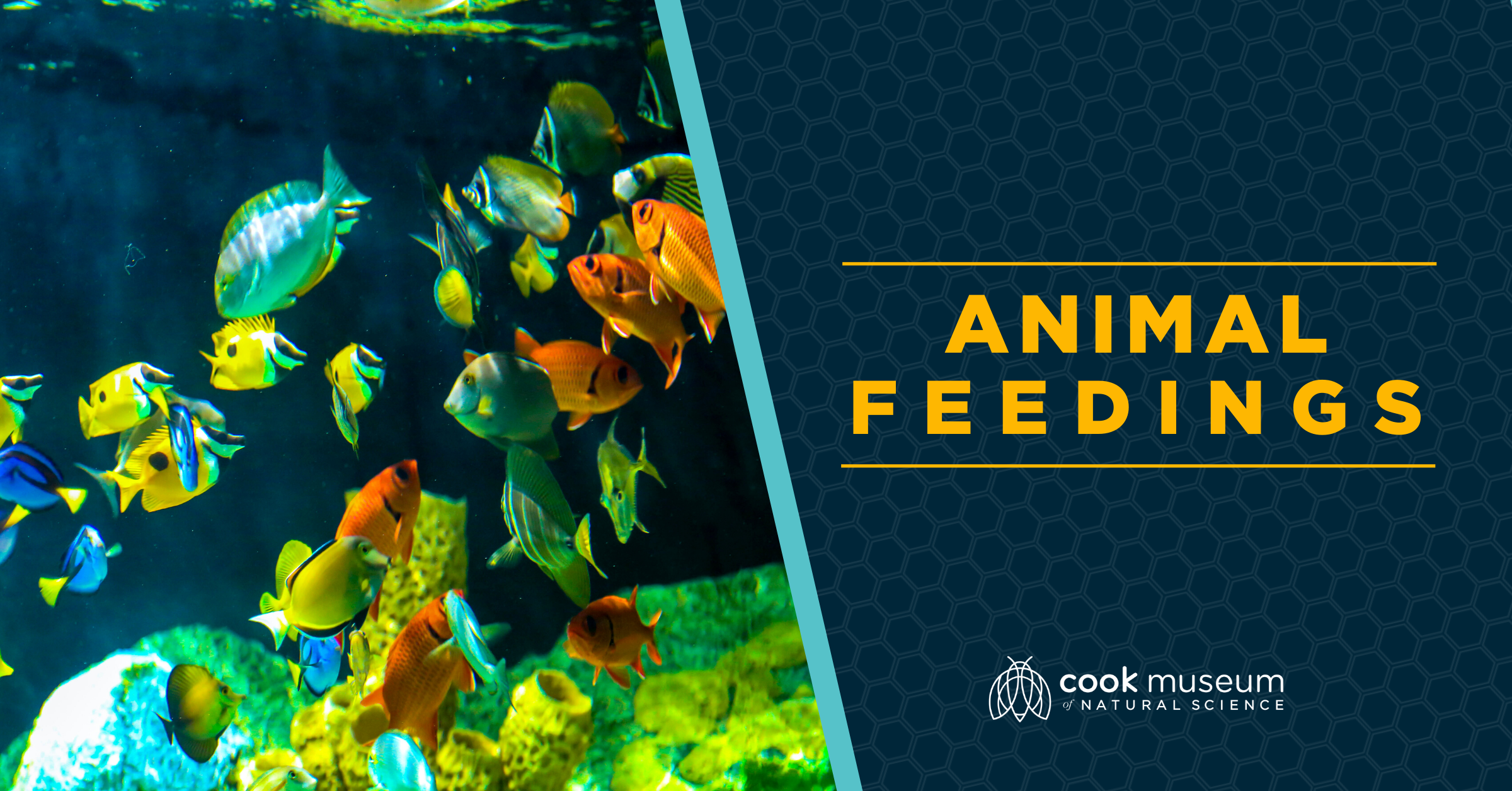 Animal Feeding - Oceans Tank