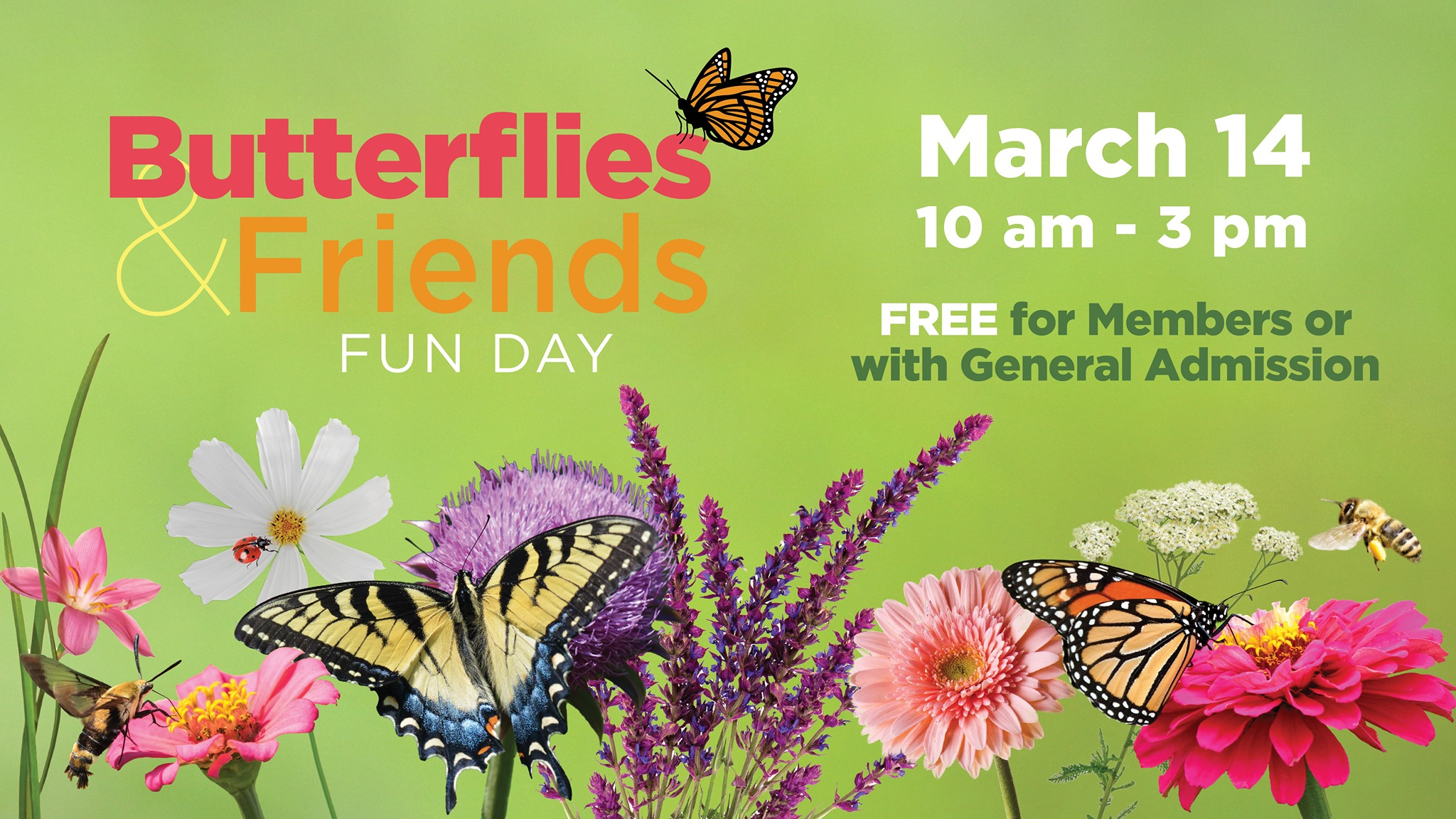 Butterflies & Friends Fun Day