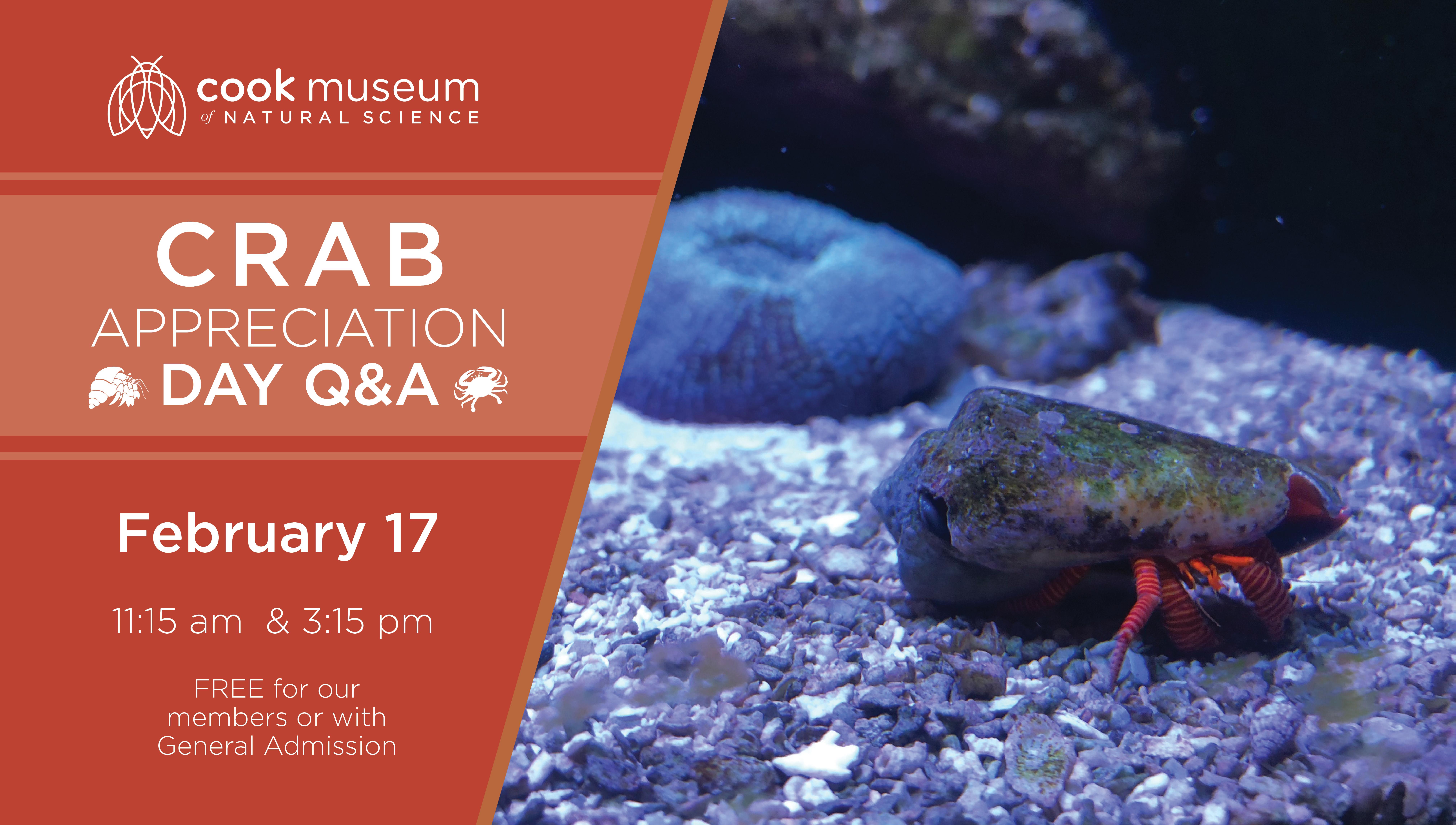 Crab Appreciation Day Q&A