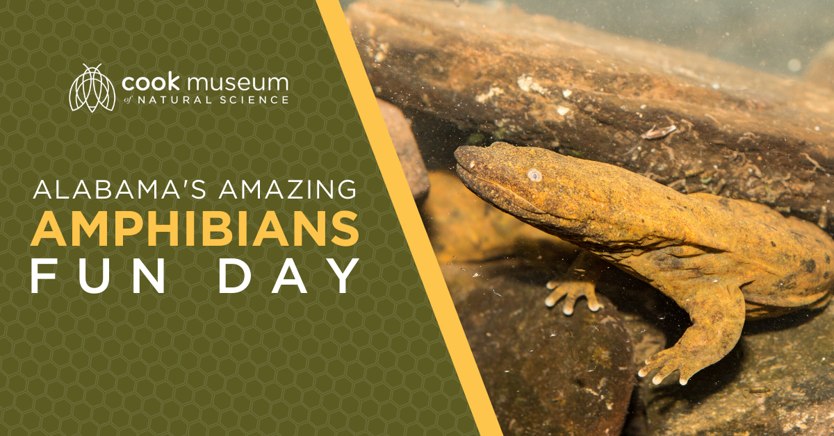 Alabama's Amazing Amphibians Fun Day