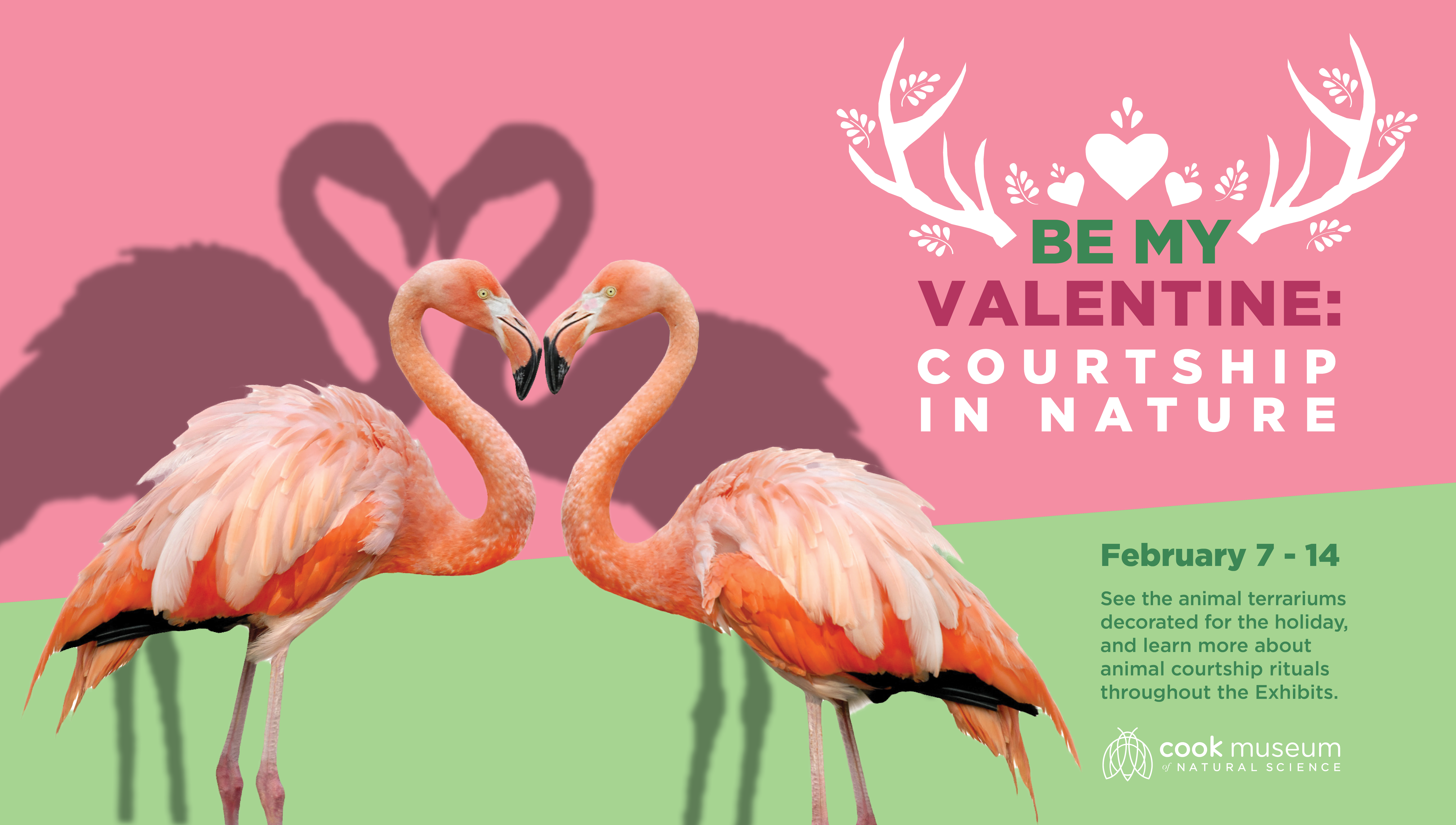 Be My Valentine: Animal Courtship Facts