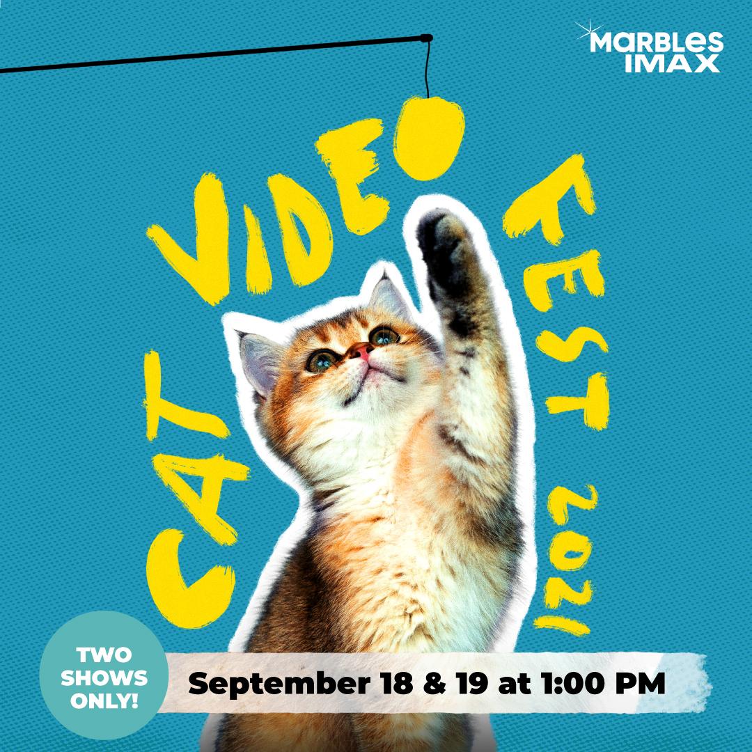 CatVideoFest 2021