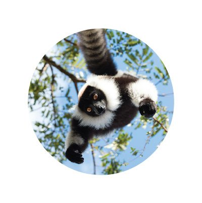 Island of Lemurs 3d | Marbles IMAX Documentaries