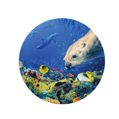 Oceans | Marbles IMAX Documentaries