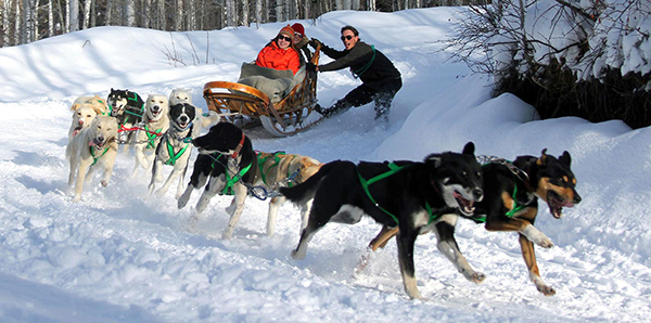 dog sledding in Aspen