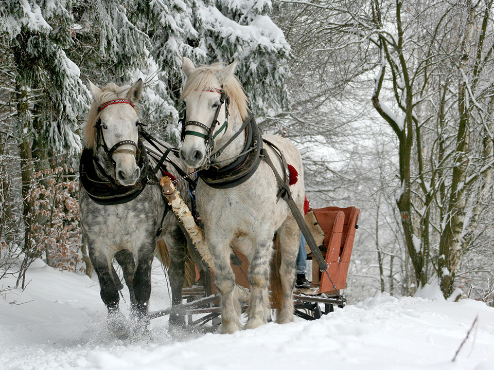 carriage rides in Aspen