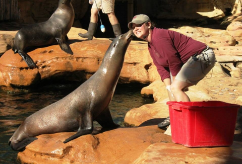 Jen Conrad, Northwest Passage, sea lion, zookeeper, Memphis Zoo