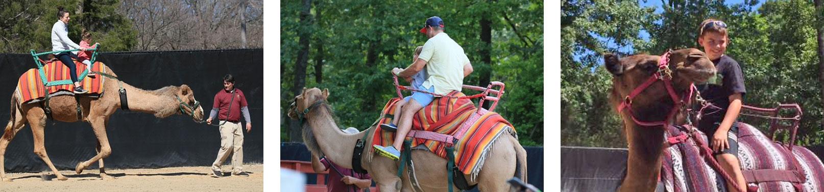 Camel rides bottom banner