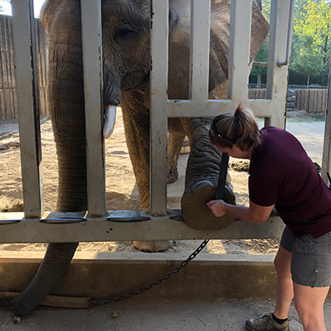 Elephant pedicure