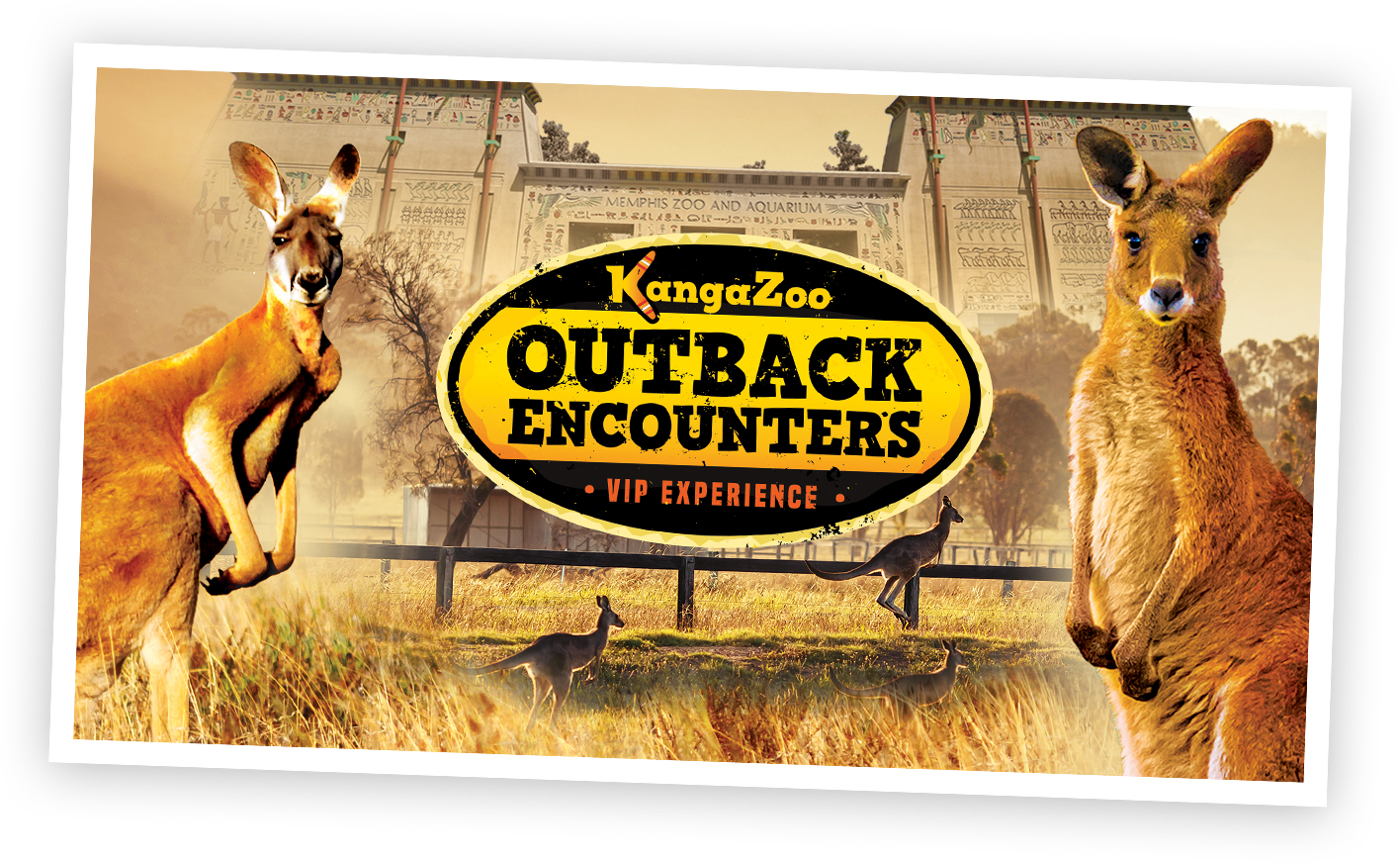 Outback Encounters