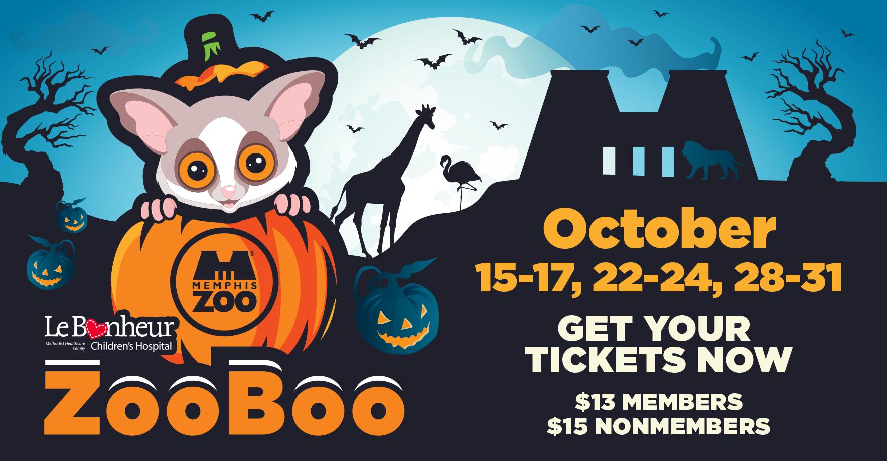 Halloween bushbaby in a jack-o-lantern