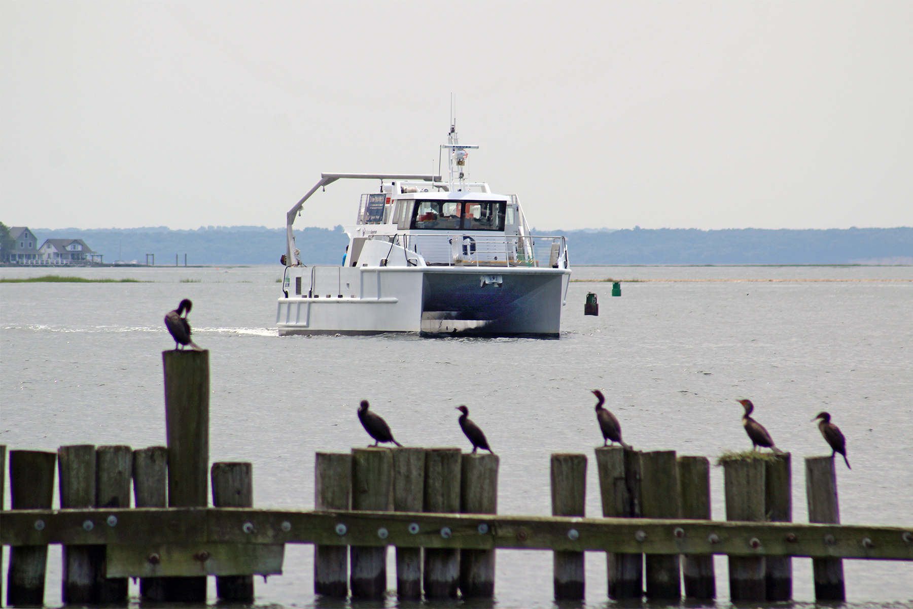 Marine Life Encounter Cruise