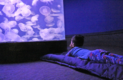 little boy laying on a sleeping bag looking at the jellyfish tank
