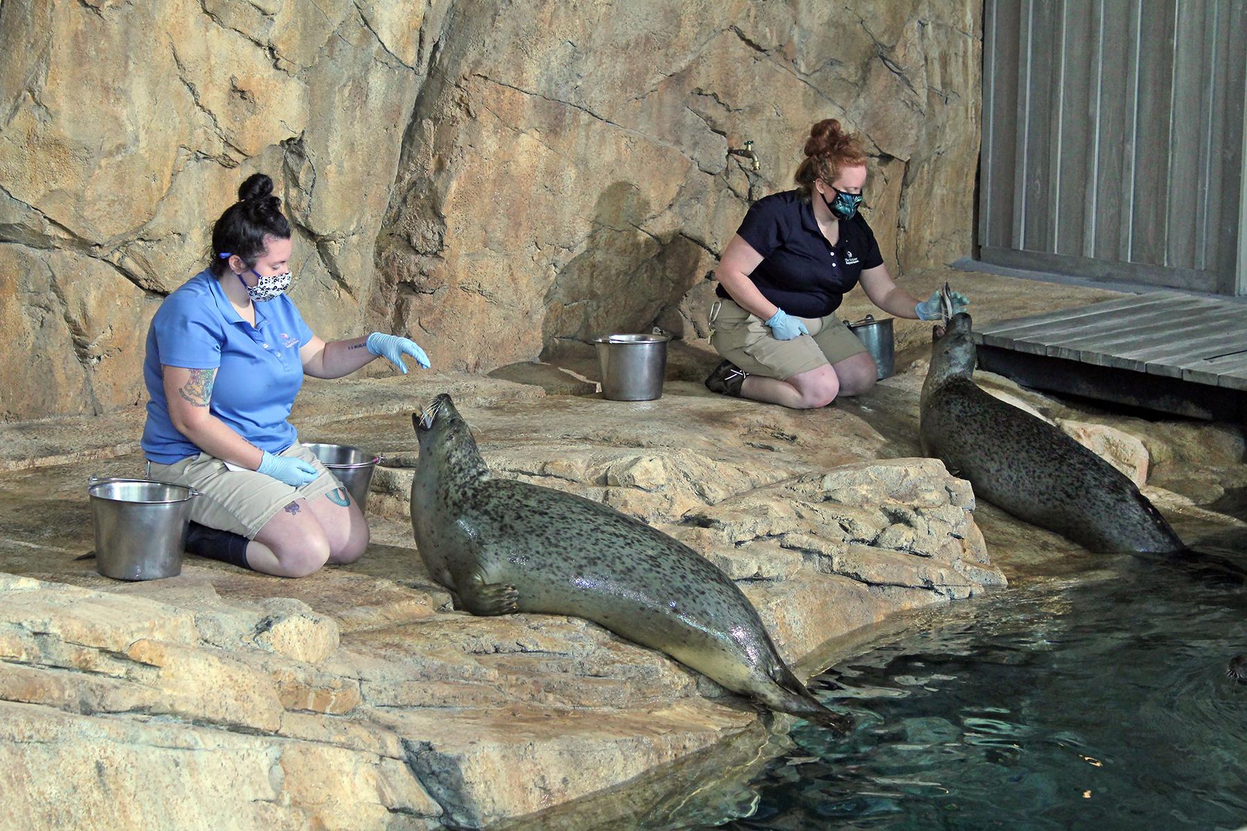 Seal Feeding Demonstration