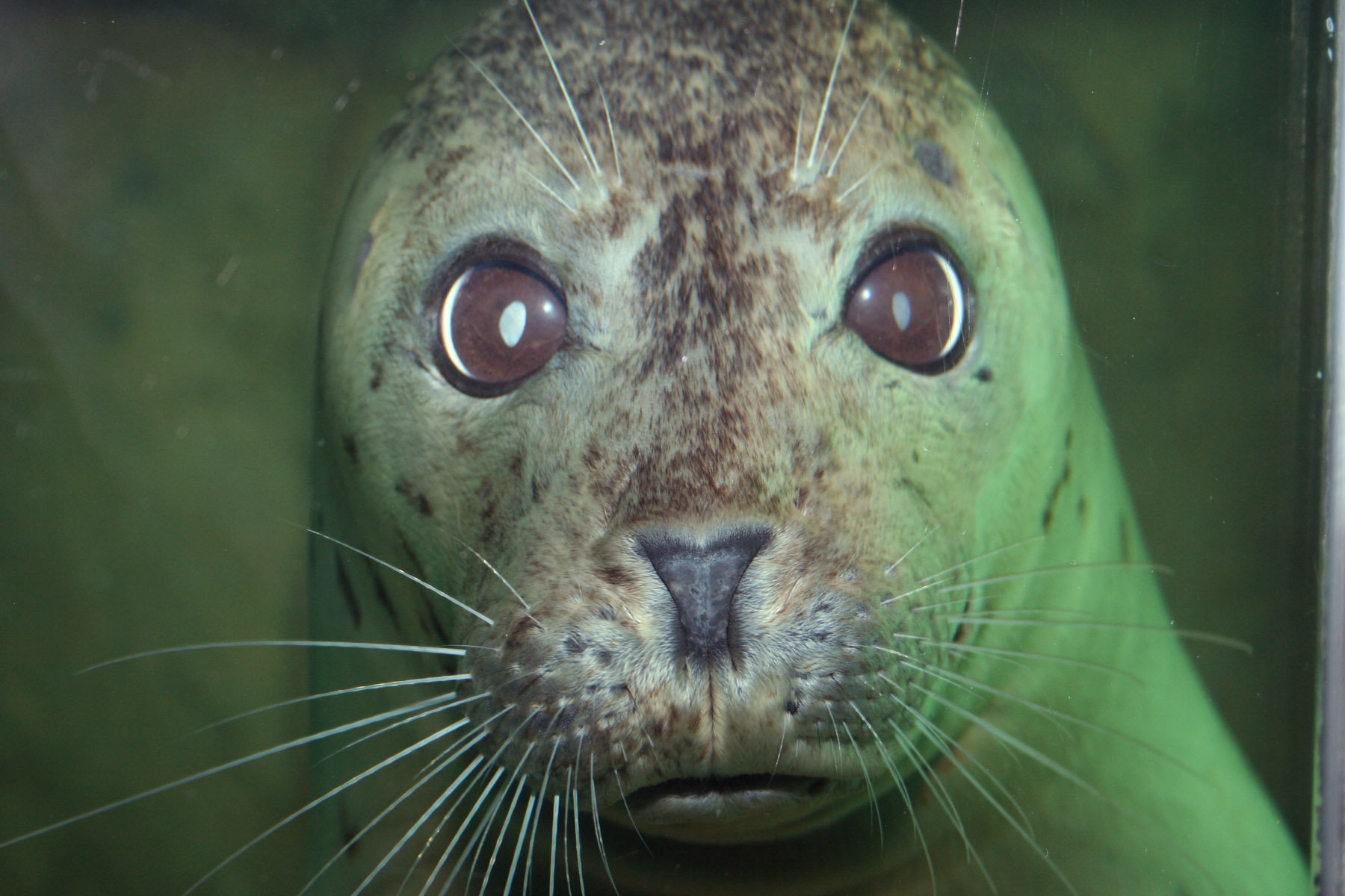 Virtual Program: All About Seals