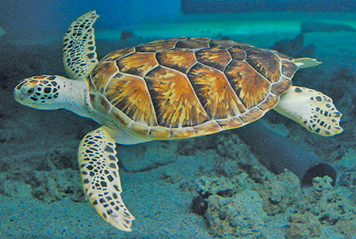 Virtual Program: All About Sea Turtles