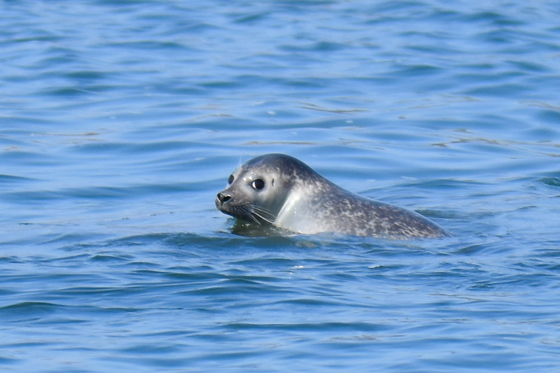 Seal-Spotting & Birding Cruise