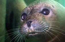 Virtual Program: Seals