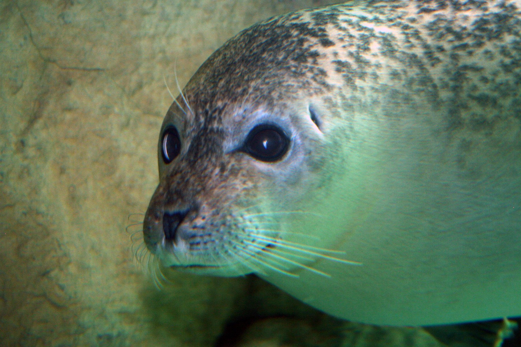 Live Facebook Q&A: Seals