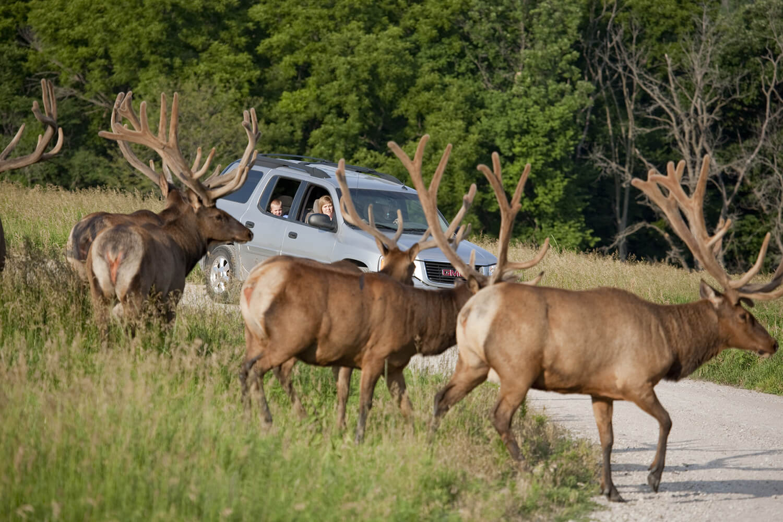 home   wildlifesafaripark com