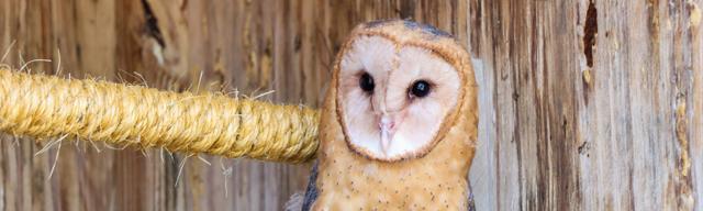 Animal Training Basics Virtual Program, Barn Owl