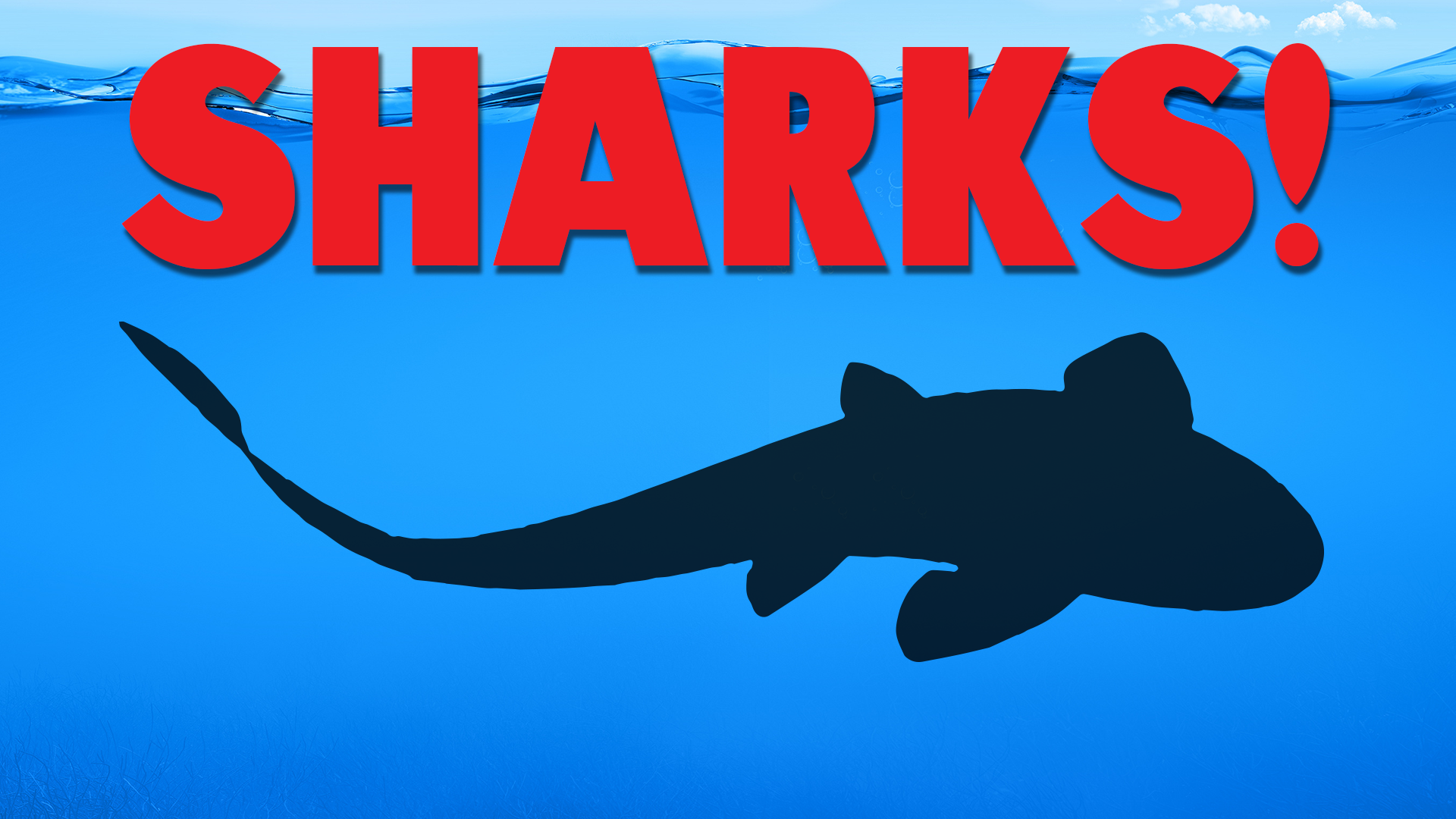 Shark Week! - Shark Touch Tank