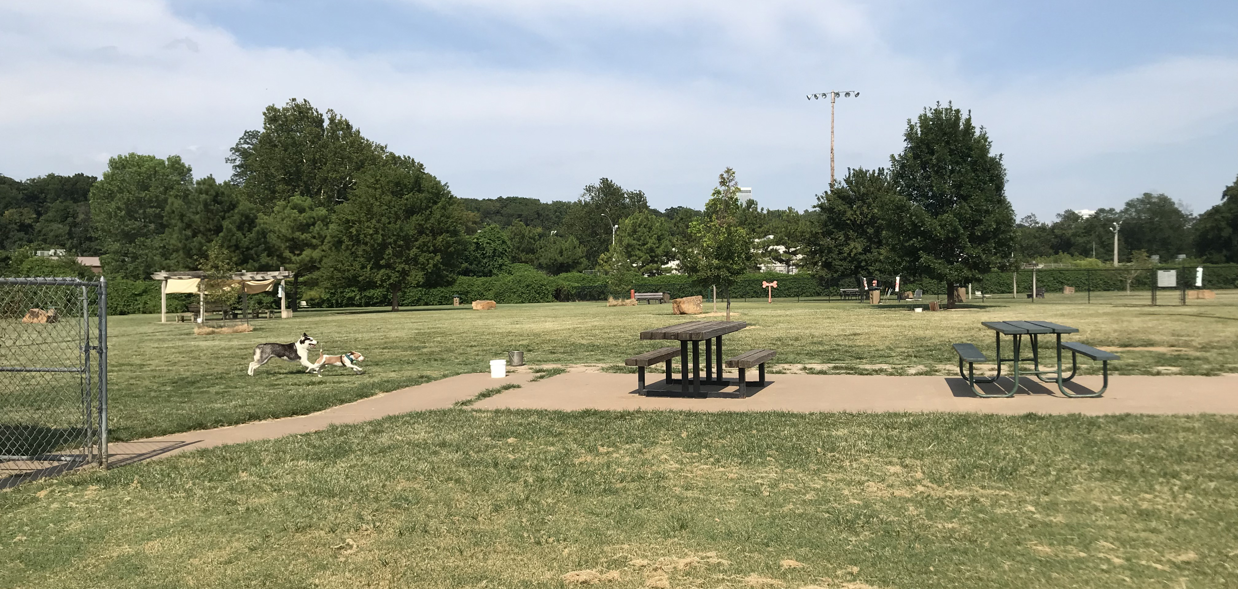 Dogs play on the large expanse of Joe Station Dog Park in Tulsa, Oklahoma.