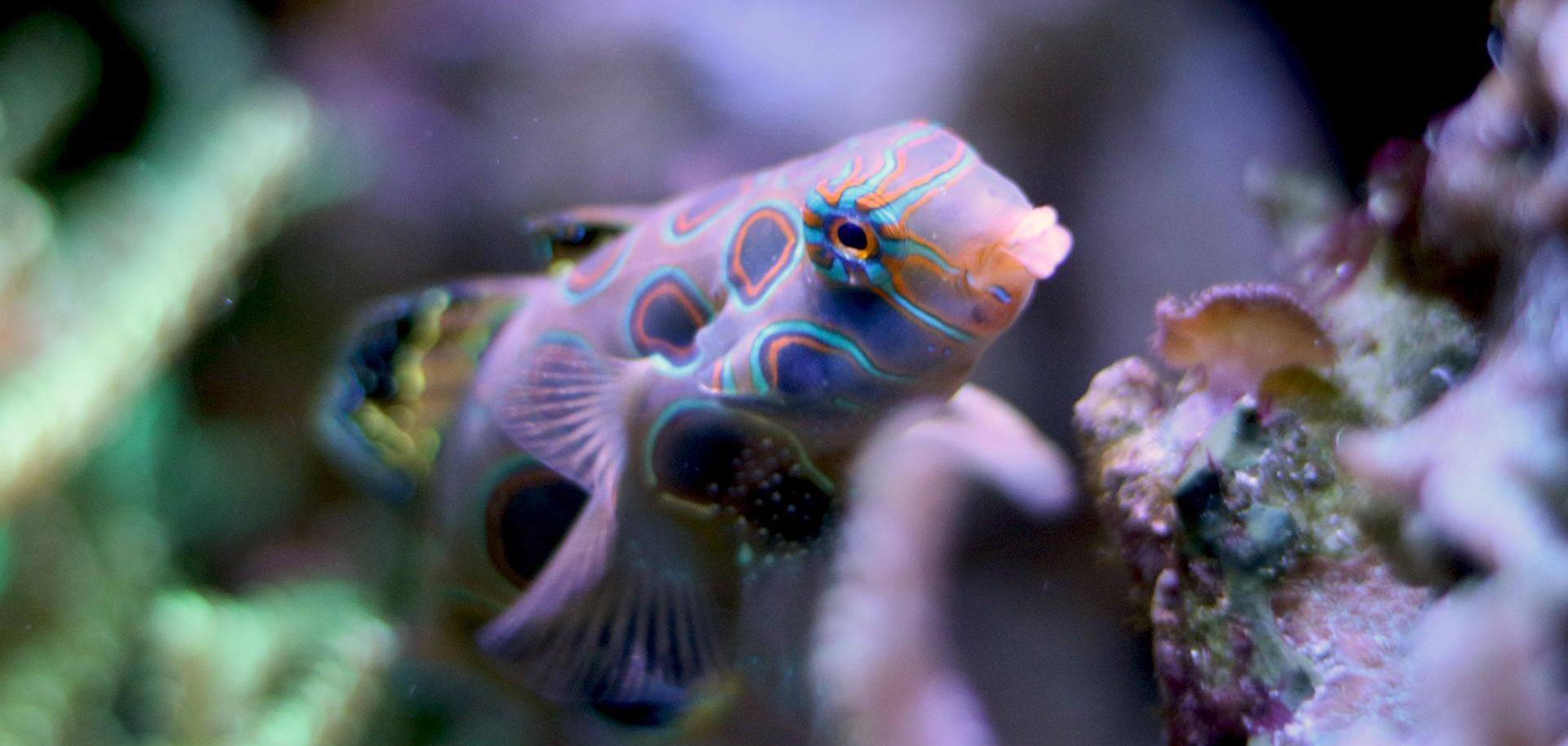 A fish at Oklahoma Aquarium near Tulsa, Oklahoma.
