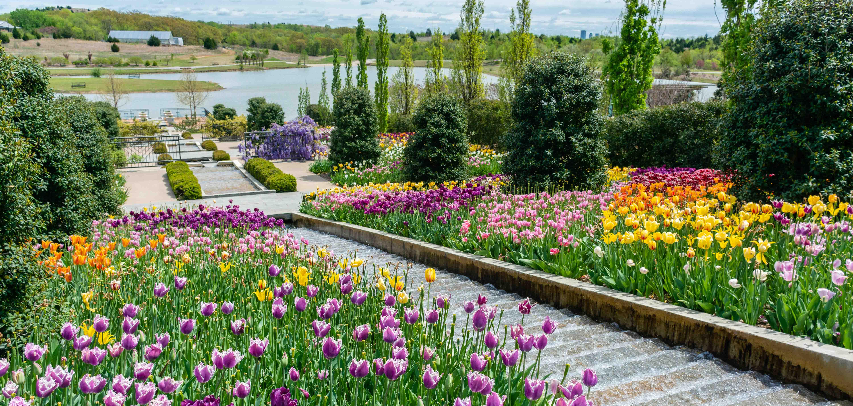 Tulips bloom at the Tulsa Botanic Garden in Tulsa, Oklahoma. The Botanic Garden is located in north Tulsa.