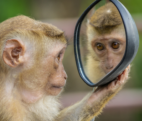 A monkey is shown at the Tulsa ZOo